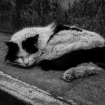 Soft kitty warm kitty little ball of fur...