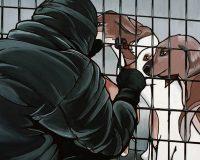 Rezension & Verlosung: Tierbefreiung – Ein Sammelband