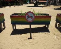 Vegan on the Road: Jericoacoara, Brasilien